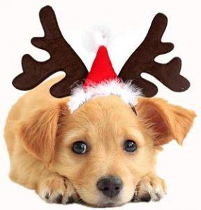 Disfraces de Navidad para perros y gatos